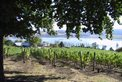 Ninth Island Vineyard
