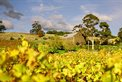 Wedding Venues Goona Warra Vineyard